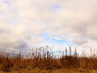 Clouds over dry grass. Zoom. Time Lapse. 320x240 Footage