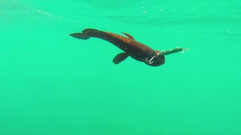 Sport Underwater Video