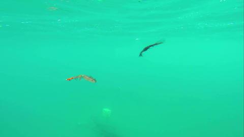 Sport Underwater Video 1