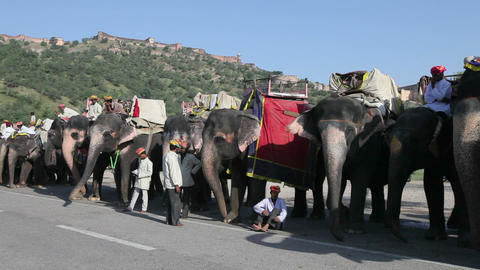 Elephants waiting to carry tourists at Amber Fort  Live Action