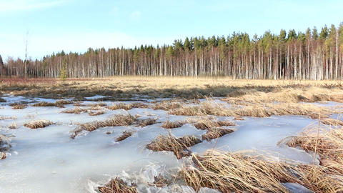 Sedge appearing from melting bog in springtime Footage