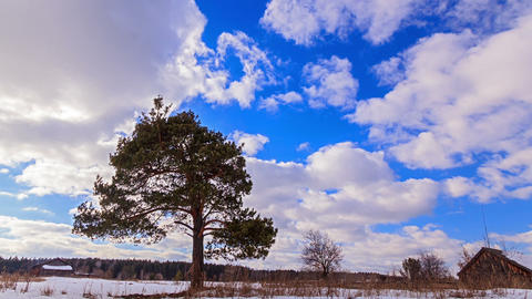 Single tree against the sky. Time Lapse Footage
