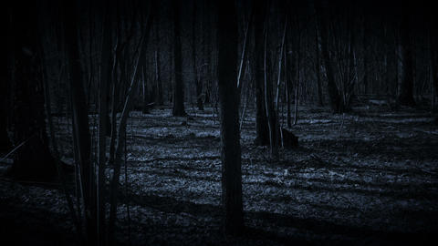 Lost in dark forest Footage