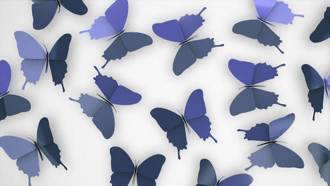 Butterfly Flower stock footage