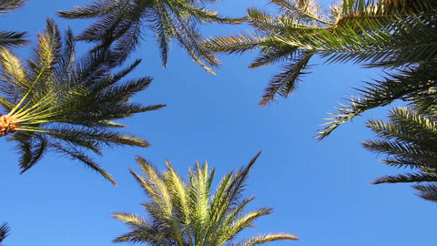background with blue sky and palm leaves Footage
