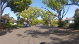 Riding Bicycle On Tree Lined Suburban Street stock footage