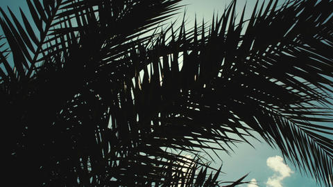 Sun playing in palm leaves Footage