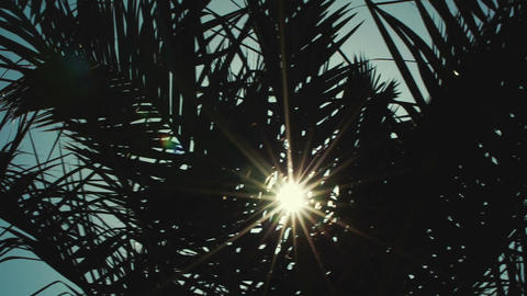 Tropical sun Footage