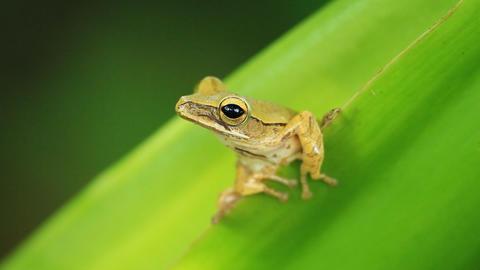 frog on the tree ビデオ