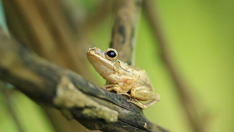 frog on the tree Stock Video Footage