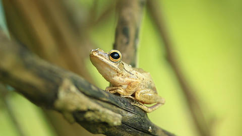 Frog On The Tree stock footage