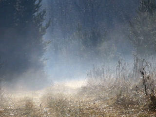 Morning Mist Over The Forest Road. 320x240 stock footage