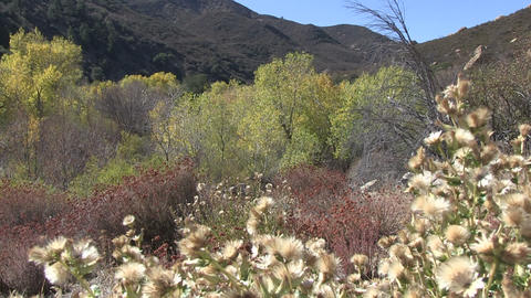 Los Padres National Forest stock footage