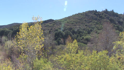 Los Padres National Forest Footage