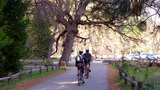 Bicycle Riding Tourists In Yosemite National Park stock footage