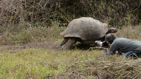 Photographer and an endemic Galapagos Giant Tortoi Live Action