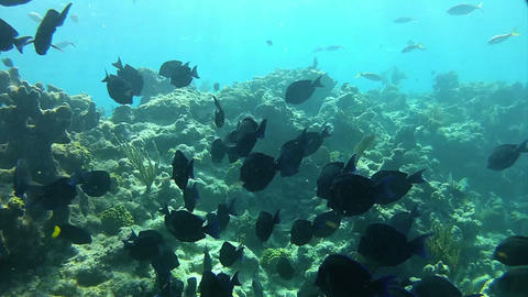 Beautiful tropical fish swim around a reef underwa Footage