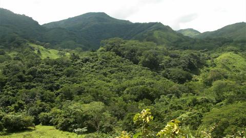 A jungle scene in Costa Rica Footage