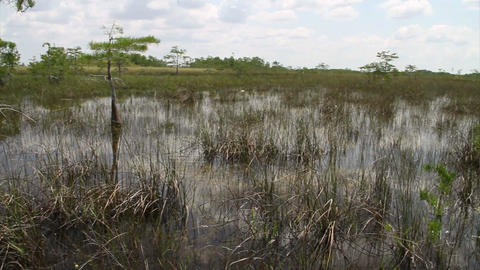 Pan across the Florida Everglades Footage