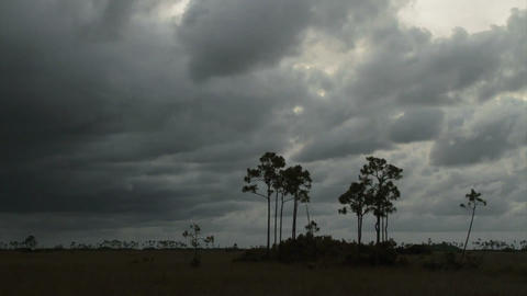 A big storm blows in over the Florida Everglades i Footage