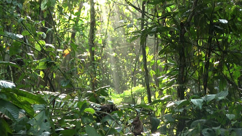 A slow tilt up in a beautiful jungle rainforest Footage