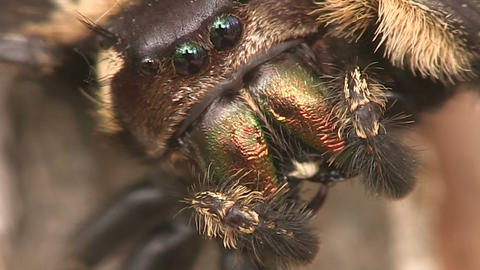 A Spider Face In Extreme Close Up stock footage
