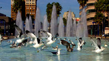 Urban Fountain With Seagulls That Fly Away stock footage