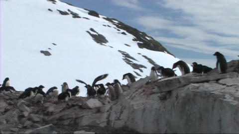 Adelie penguins Stock Video Footage