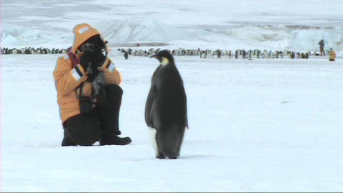 Emperor penguin looking at tourist Stock Video Footage