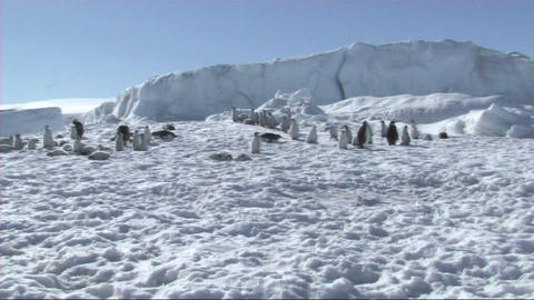Emperor penguin colony Stock Video Footage