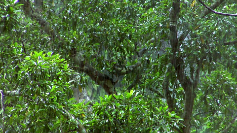 heavy rain forrest close Stock Video Footage