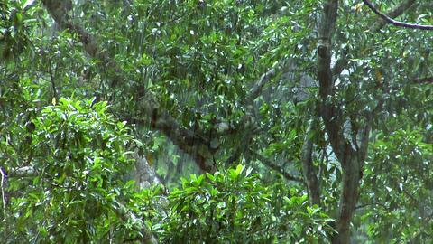 heavy rain forrest close Stock Video Footage