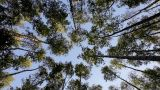 View At Sky Through Trees stock footage