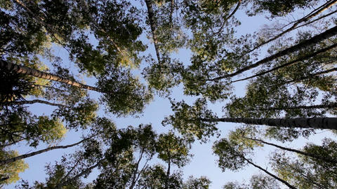 View at sky through trees Stock Video Footage
