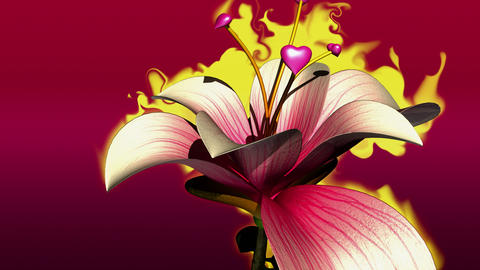 the love flower Animation