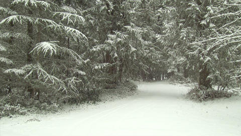 Snow Covered Forest Road In Winter stock footage