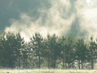 Fog Over Trees. 320x240 stock footage