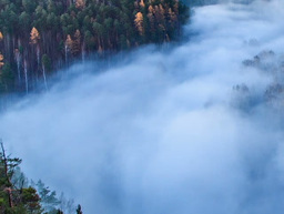 Autumn Forest In The Fog. Time Lapse. 320x240 stock footage