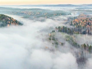 Autumn forest in the fog. Time Lapse. 320x240 Footage