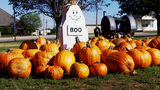 Small Town Halloween Fall Festival Pumpkin Patch stock footage
