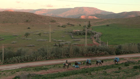 Moroccan Donkeys Carry Gas Cans 1 - FT0038 stock footage