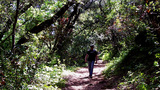 Man Hiking Trail Through Heavily Wooded Forest stock footage
