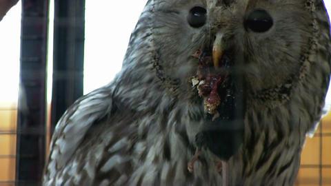Owl Footage