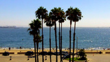 Palm Trees Beach And Ocean Long Beach CA stock footage