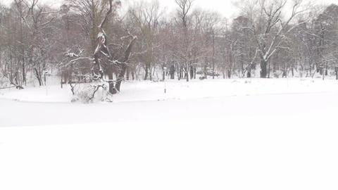 Frozen Lake In A Park Still-Shot Footage