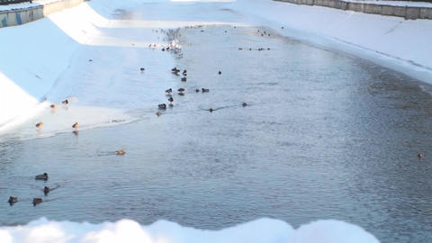 Frozen River With Ducks And Seagulls Footage