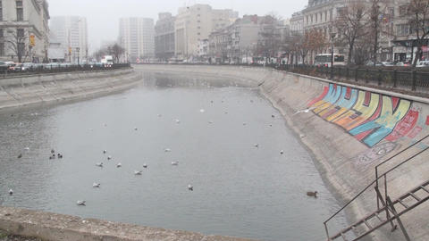 River With Seagulls In Downtown Bucharest Front-Sh stock footage