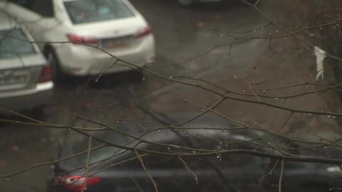 Branches In The Rain Footage