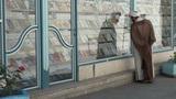 Mullah looks through windows of bookstore in Iran Footage