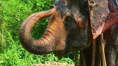 Washing the elephant Live Action